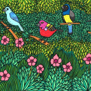 Little Birds of Brazil